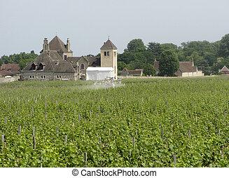 Spraying the vineyard