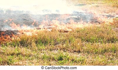 Spreading wildfire on grass. Close up. Destructive fire in...