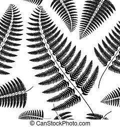 Sprig of black fern on a white background.