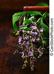 Sprig of fresh flowering sage