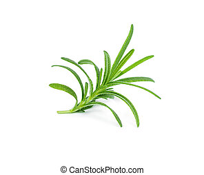 Sprig of fresh rosemary isolated on white background