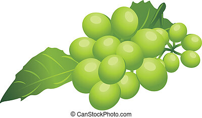 Sprig of green grape. Vector illustration