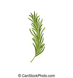 Sprig of green rosemary. Fresh herb used in culinary. Organic ingredient for flavoring dishes. Graphic element for culinary book or poster. Colorful flat vector design isolated on white background.