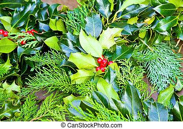Sprig of holly - Close up shot of Christmas Holly Sprig