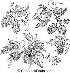 Sprig Of Hop Decorative Sketch