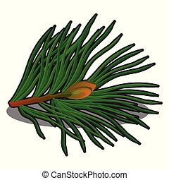 Sprig of pine isolated on white background. Vector cartoon close-up illustration.