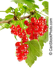 Sprig of red currants