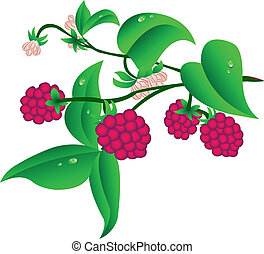 Sprig Raspberry