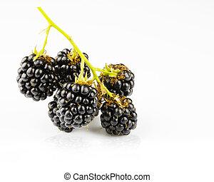 sprig sweet blackberries isolated on white