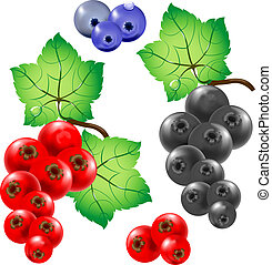 Sprigs of red and black currants. Berries.