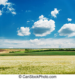 spring agriculture field under blue sky with clouds