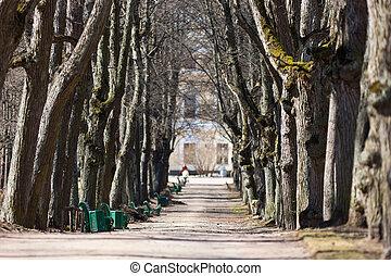 spring avenue