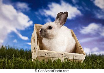 Spring baby bunny