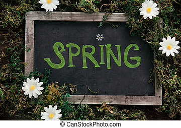 Spring background. Chalkboard with daisy flowers on wood