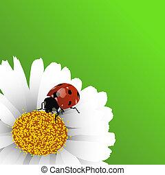 Spring background - Green background with ladybug on...