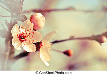 Spring background from glossom of plum and blue sky, pastel...