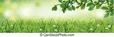 Spring Background Grass Beech Twigs Header