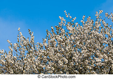 spring  background.  Spring Time