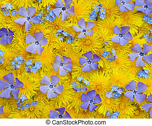 Spring background - Surface with yellow (dandelion) and blue...