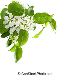 Spring background with beautiful blossom apple tree