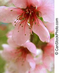 Spring  background with beautiful blossom