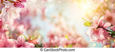Spring background with beautiful cherry blossoms