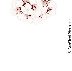 Spring Background with Cherry Blossom, Place for Text