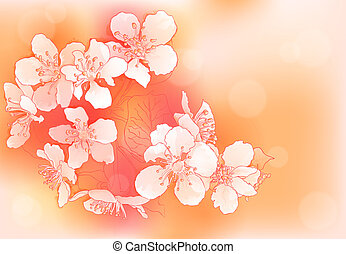 cherry blossoms - Spring background with cherry blossoms