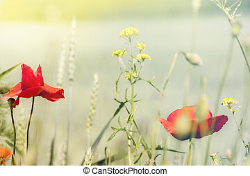 Spring Background with Field Poppy and Meadow Plants