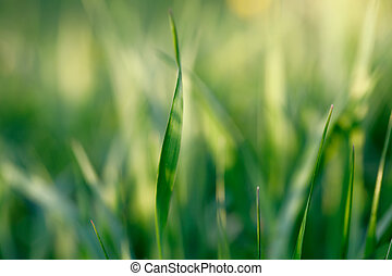 spring background with grass on meadow