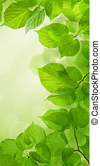 Spring background with green leaves and sun light