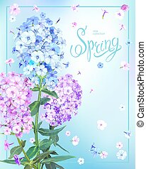 Beautiful floral background with blooming flowers of pink, lilac and light blue phloxes, green leaves. Inscription Spring in frame on pastel sky blue background. Vector illustration