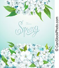 Beautiful floral background with blooming flowers of white and light-blue phloxes and green leaves. Inscription Spring on a background of turquoise blue color. Vector illustration
