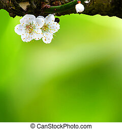 Spring background with plum flowers on black
