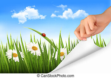Spring background with sky, flowers, grass and a ladybug. Vector.