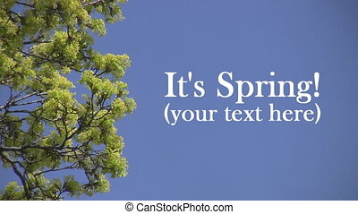 Spring Background with textspace.