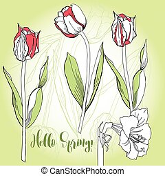 Spring background with tulips.