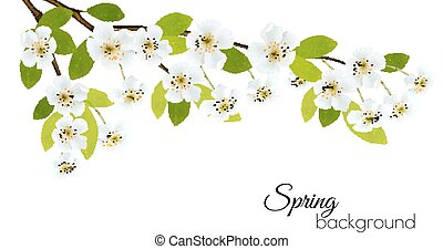 Spring background with white flowers. Vector.