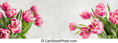 Spring. Banner of pink tulip on vintage white. Space for text.
