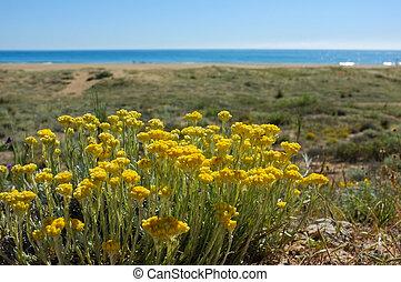 Spring beach - Springtime on a Mediterranean beach,...