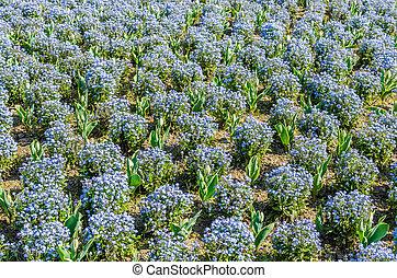 park with blue color flowers