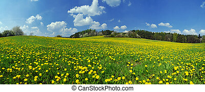 Spring - Beautiful spring panoramatic shot with a dandelion ...