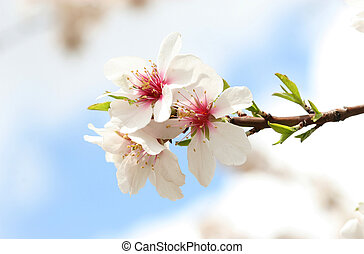 spring - beauty in nature