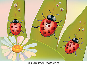 beetles - Spring-beetles attracted to the sun