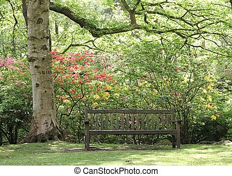 Wooden bench in a sunny spring park, beneath trees and azalea and rhododendron bushes