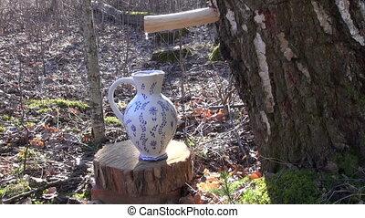 spring birch sap drops in jug - spring birch sap drops in...
