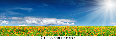 Spring bloom - Blossoming field and blue sky