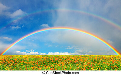 Spring bloom - Landscape with blossoming field and rainbow