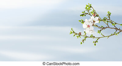 Spring blooming almond tree against blue sky