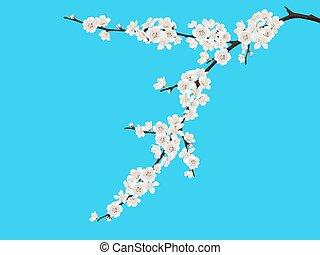 Spring blooming cherry branch